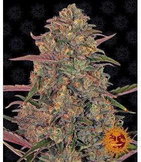Pineapple Chunk - Barney's