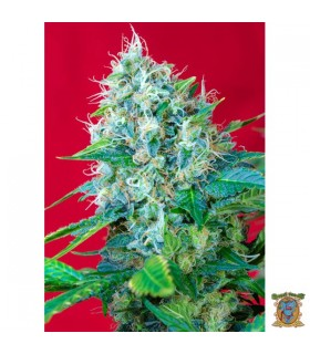 Green Poison - Sweet Seeds.
