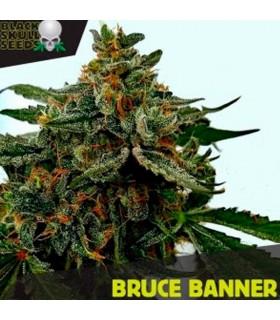 Bruce Banner - Black Skull Seeds.