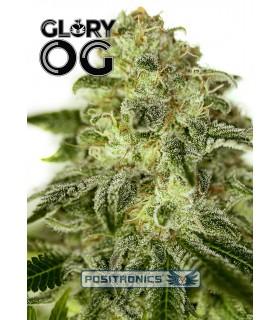 Glory OG - Positronics - Kayamurcia.es