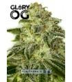 Glory OG - Positronics.