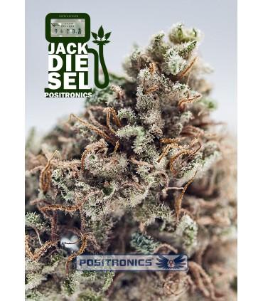 Jack Diesel - Positronics - Kayamurcia.es