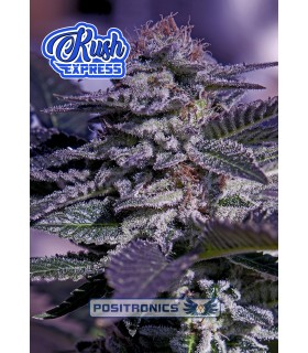 Auto Kush Express - Positronics - Kayamurcia.es