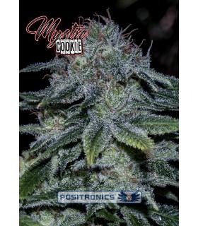 Mystic Cookie - Positronics - Kayamurcia.es