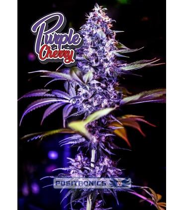 Purple Cherry - Positronics - Kayamurcia.es