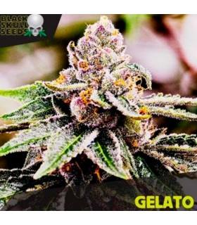 Gelato - Black Skull Seeds.