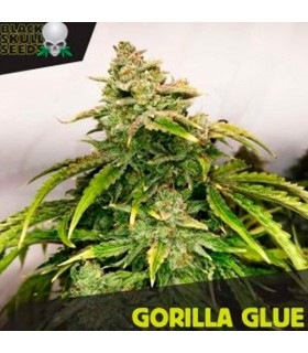 Gorilla Glue - Black Skull Seeds.