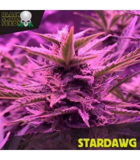 Stardawg - Black Skull Seeds.