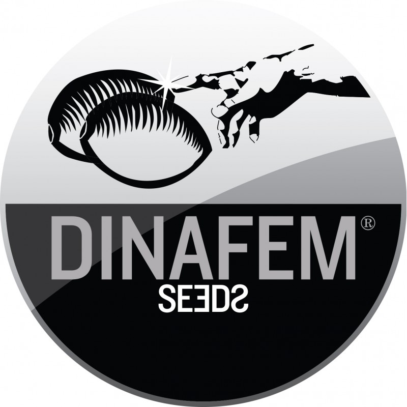 dinafem-seeds.jpg